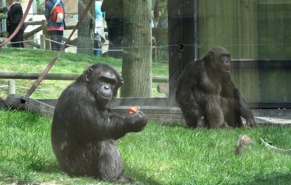 Sucesos.- Grave una cuidadora del Zoo de Madrid al ser atacada por un gorila