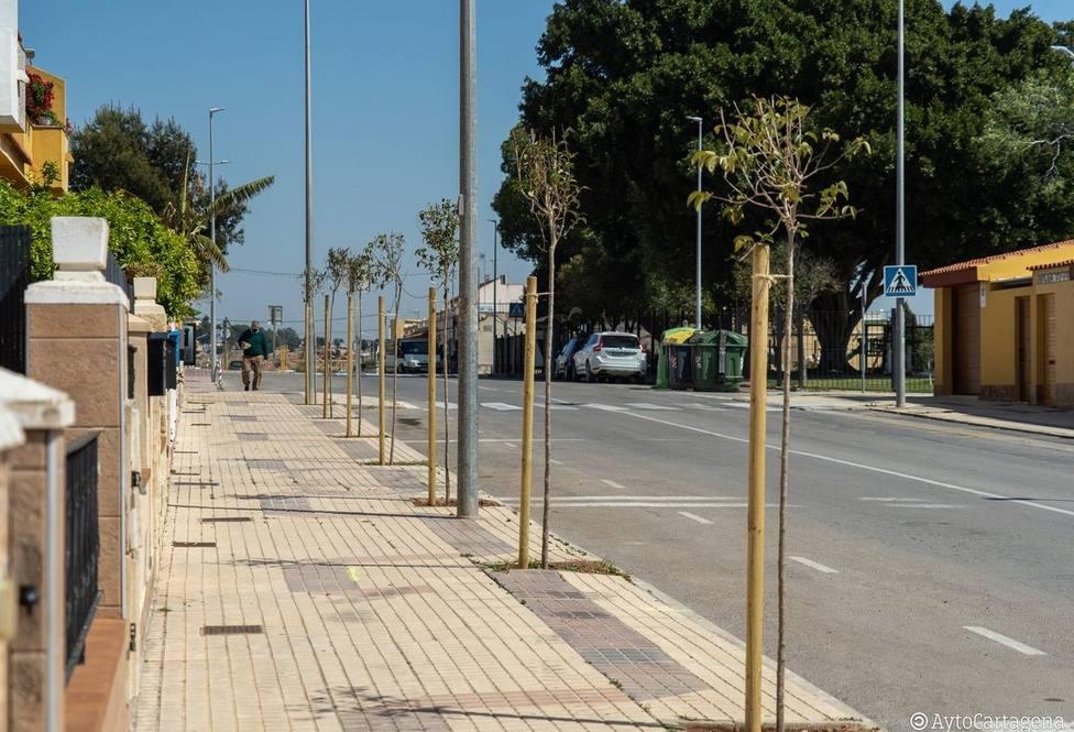 El Ayuntamiento planta nuevo arbolado en San José Obrero y podará 2.400 palmeras en Isla Plana y La Azohía