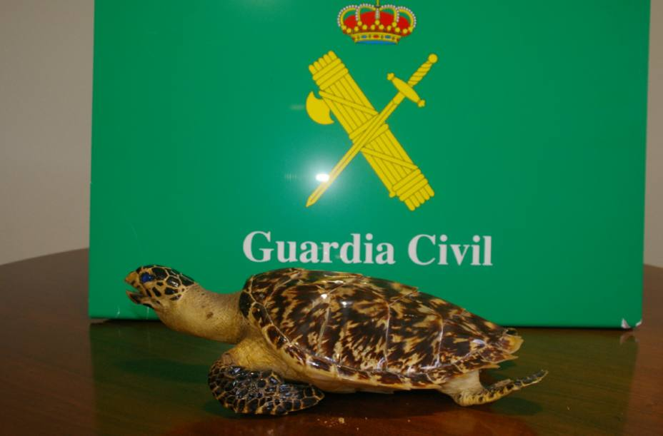 Tortuga incautada por la Guardia Civil