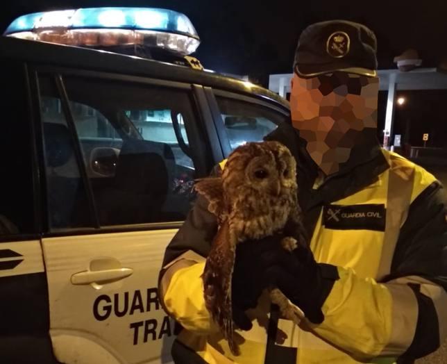 Agente de la Guardia Civil de Tráfico con el cárabo común - FOTO: Guardia Civil