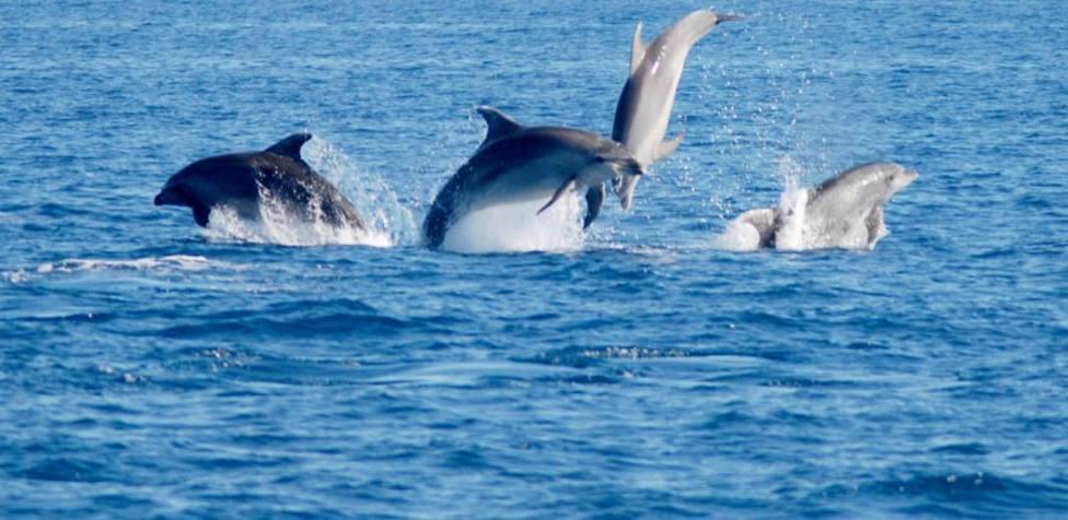 El ruido de los cruceros en Cartagena no supera los límites para que los cetáceos pierdan audición