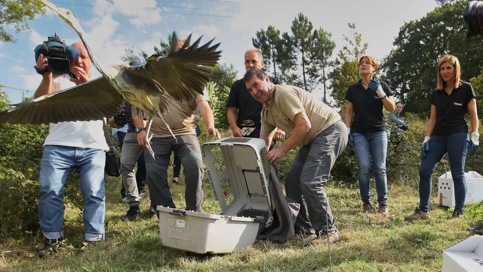 Suelta de aves en Bizkaia