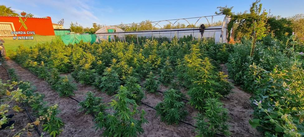 Descubierta una finca donde se cultivaban 400 plantas de marihuana