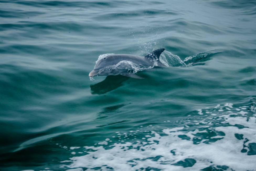 Un peligroso virus amenaza a los delfines del Mediterráneo
