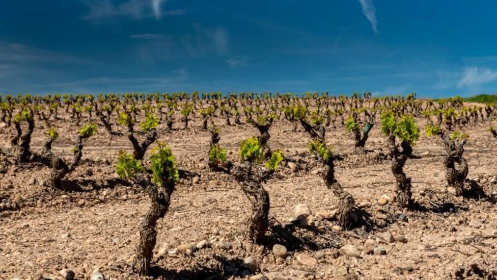 Aprobada una transferencia de crédito de 228.000 € para apoyar la contratación de seguros agrarios