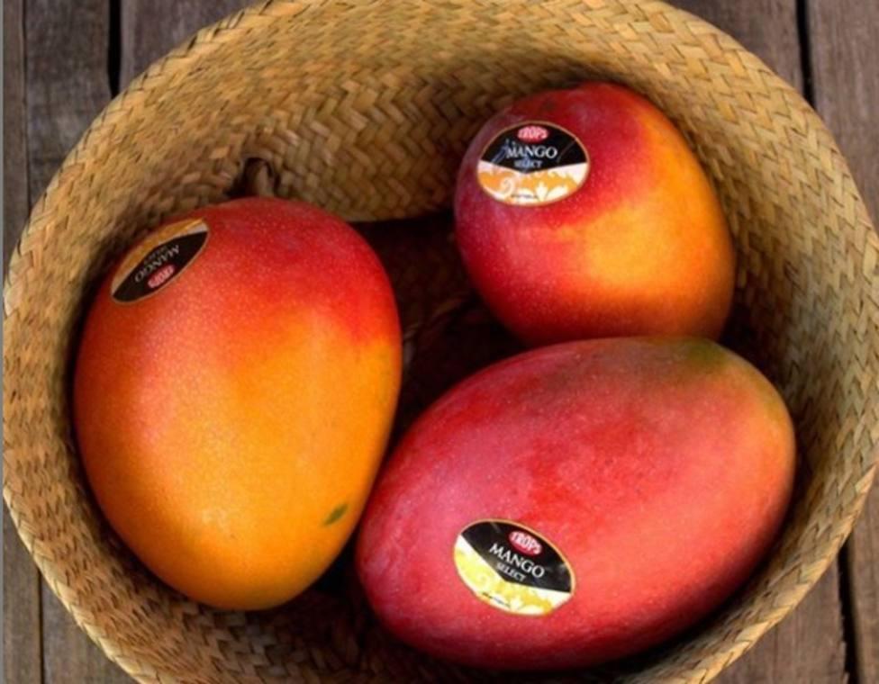 Trops y Axaragua trabajan en un proyecto para utilizar agua regenerada en el cultivo de mango