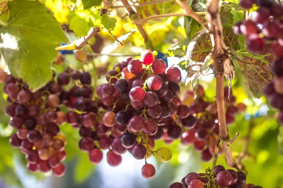 Esto es lo que desconoces sobre los cultivos ecológicos y que te sorprenderá