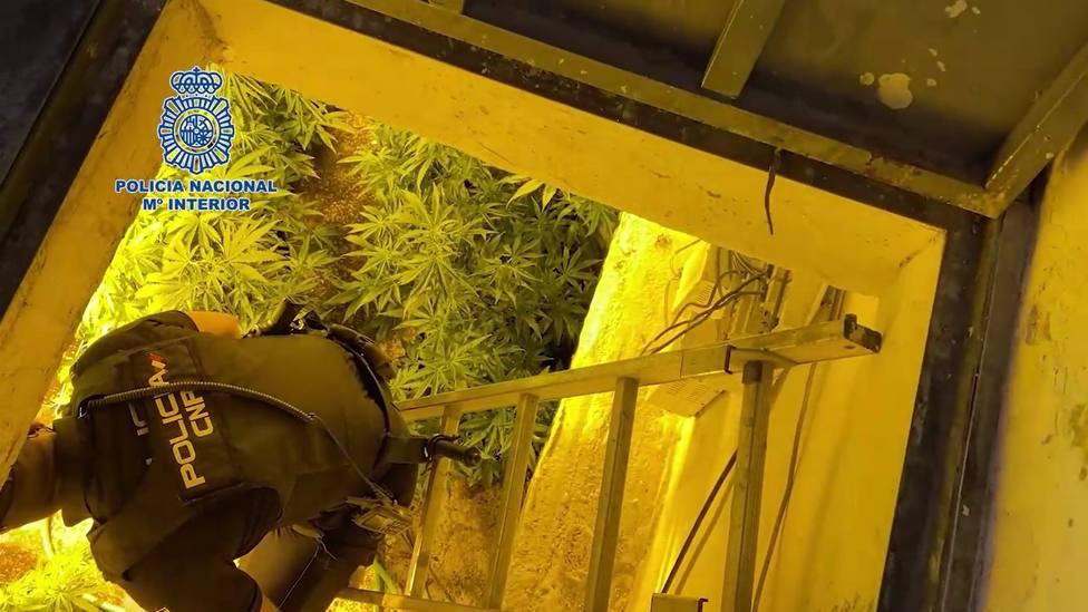 Sucesos.- La Policía Nacional desmantela dos zulos repletos de plantas de marihuana en Murcia