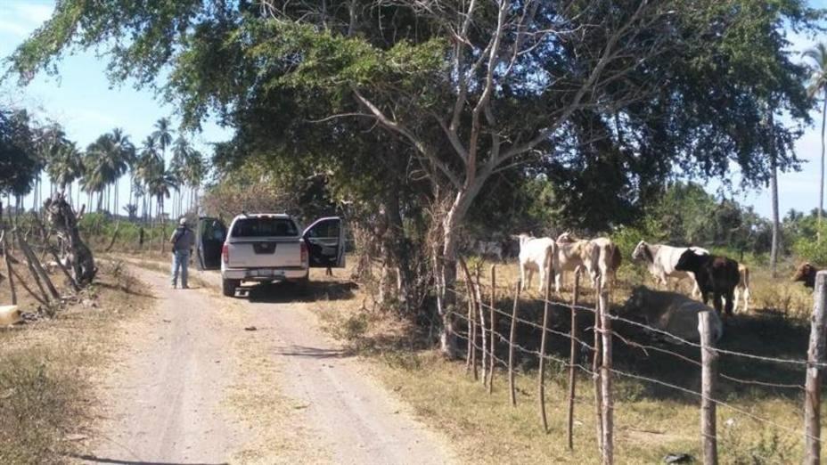 Hallan al menos 69 cuerpos en varias fosas comunes en el estado mexicano de Colima