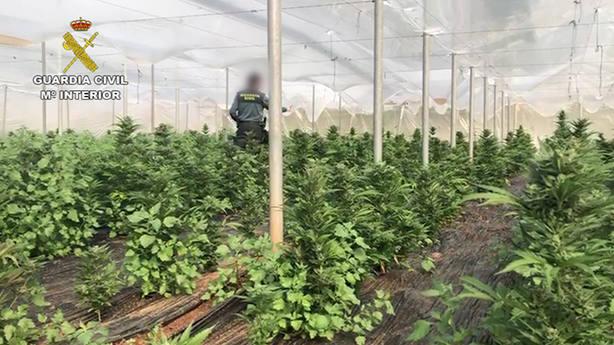 Plantación marihuana/Guardia Civil