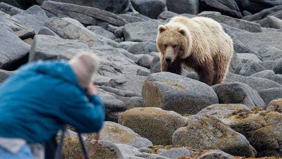 Así despertó un oso salvaje a dos jóvenes que dormían una siesta en el campo