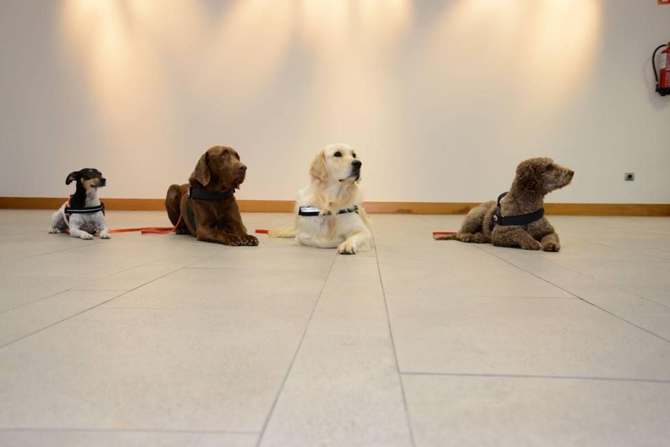 Bosco, Pot, Uva y Matilda, perros de terapia