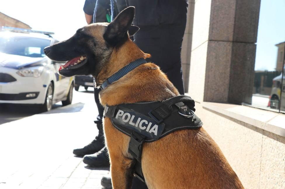 ctv-z3x-0428-unitat-canina-01