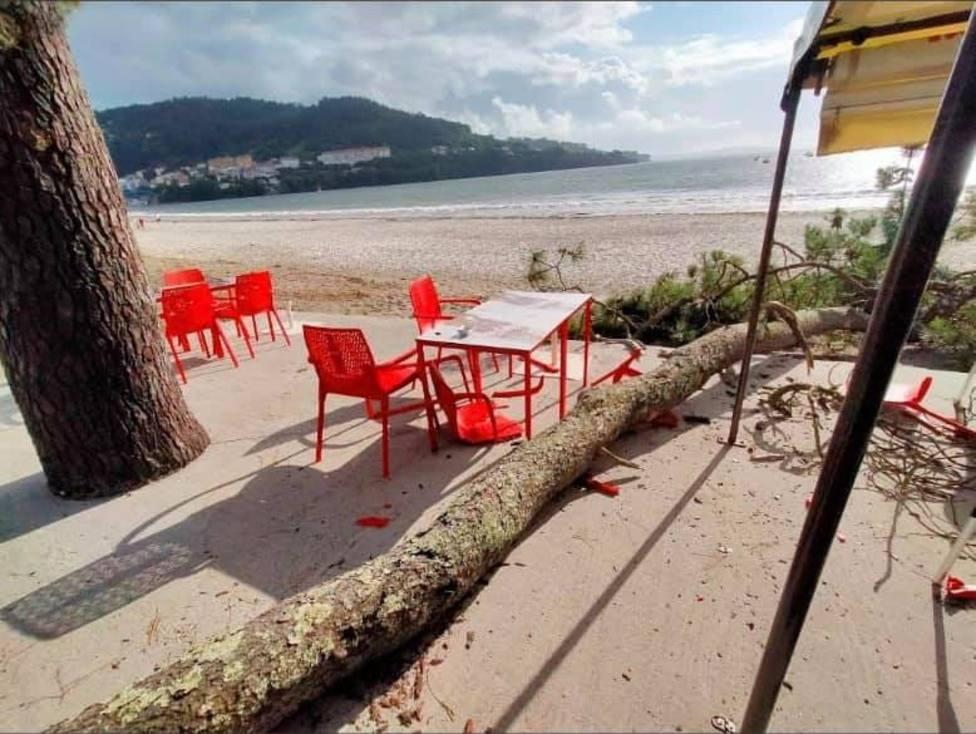 La caída del árbol afectó a la terraza del chiringuito Koa ubicado a pie de playa. FOTO: PP Cabanas
