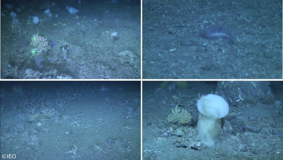 Científicos del Instituto Español de Oceanografía estudian los hábitats profundos del golfo de Cádiz