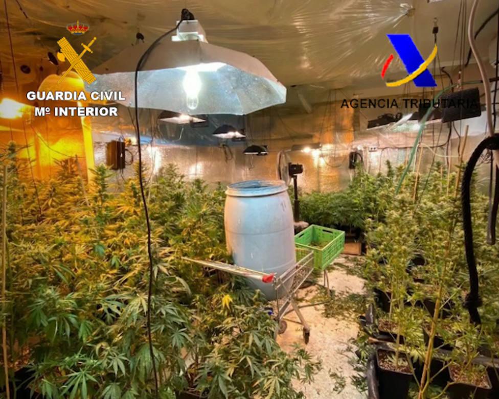 Son más de 1.000 plantas de marihuana las incautadas