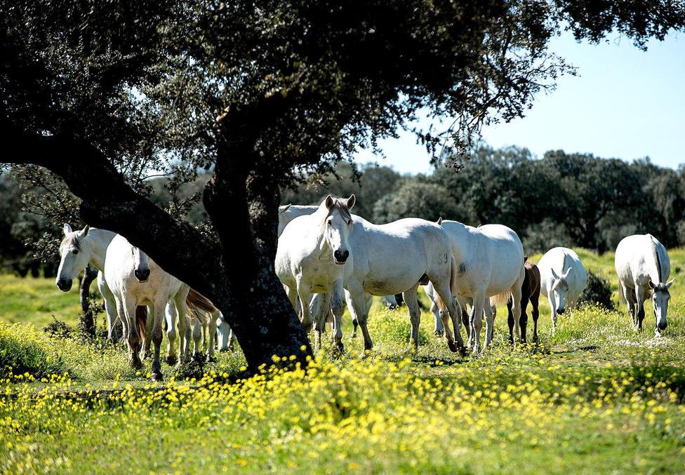Andalucía convoca ayudas para el viñedo y equino de cría, afectados por la Covid-19