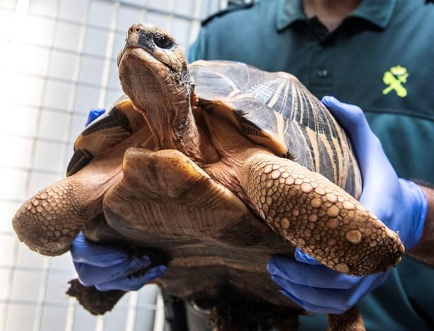 Desmantelan una de las mayores organizaciones de tráfico ilegal de tortugas