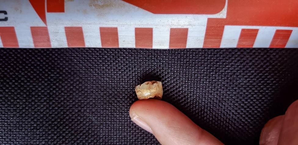 diente neandertal Prado Vargas