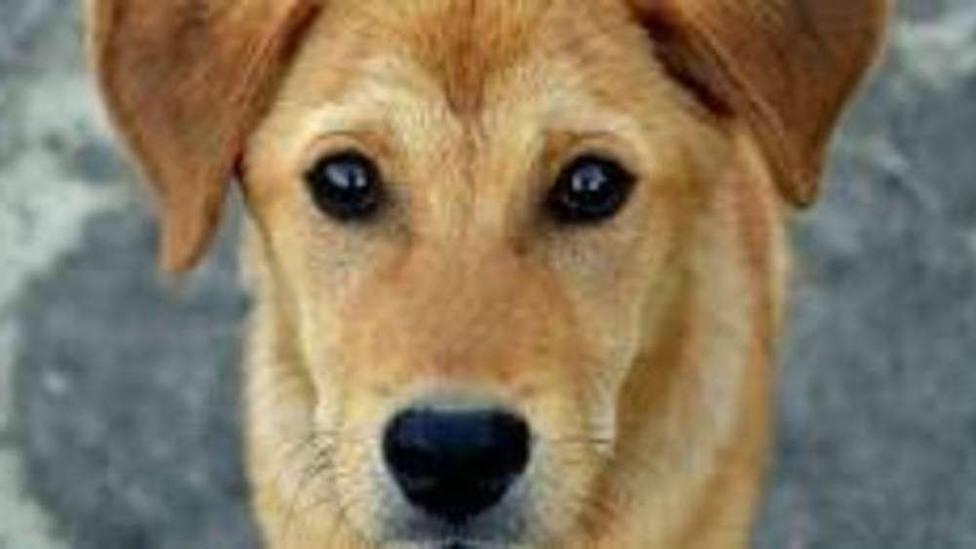 La inédita reacción de un perro al escuchar la sirena de una ambulancia que ha cautivado a las redes