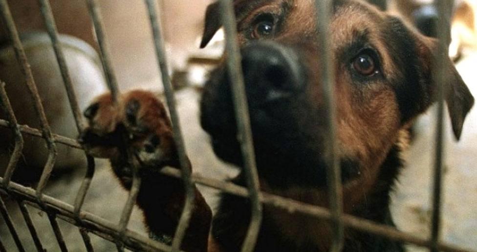 Los perros abandonados que se refugian en una parroquia y que causan furor entre los feligreses