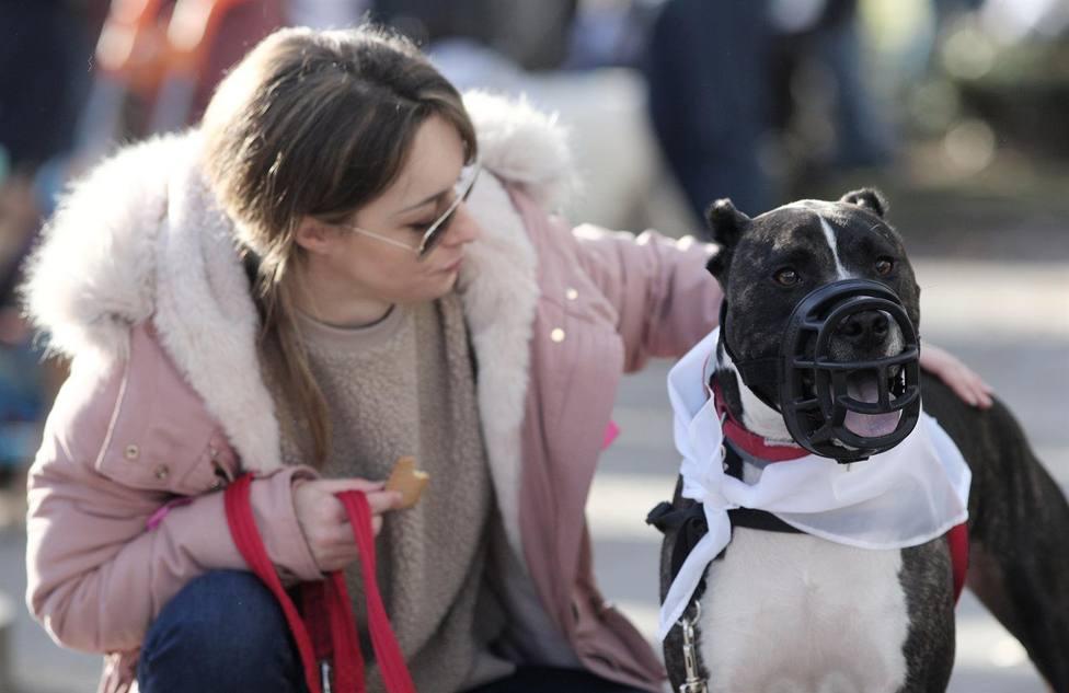 ¿Sabes cuanto tendrás que pagar en Sevilla si no limpias el pis de tu perro?