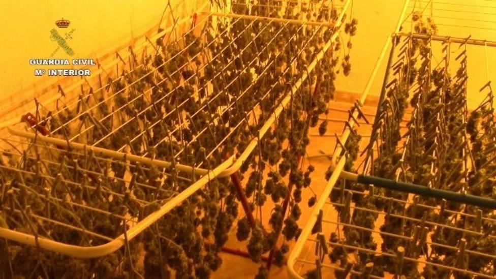 plantaciones indoor