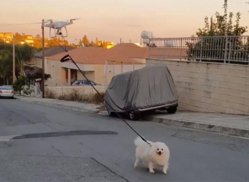 El insólito paseo de un dueño a su perro que dejó a sus vecinos sin palabras