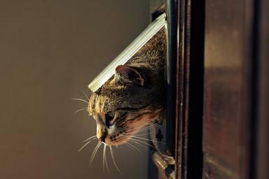 ¿Cómo saben los gatos volver a casa?