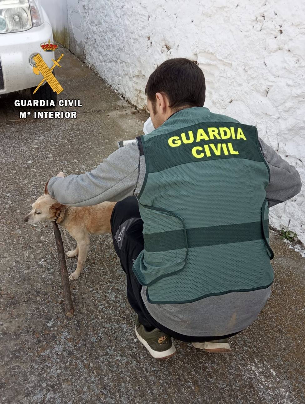Investigan por maltrato animal a un hombre que, supuestamente, ató al cuello de su perro un gran palo