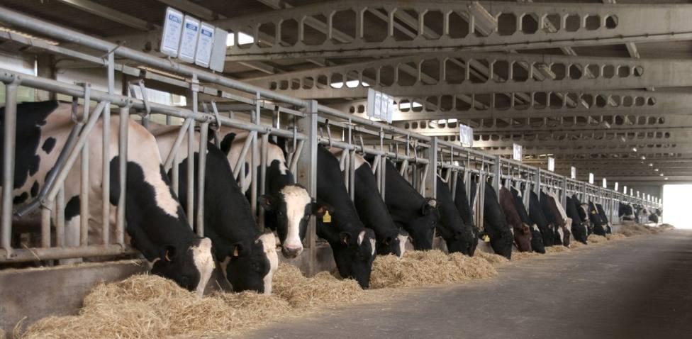 """Ganaderos de Lugo y A Coruña denuncian una """"estrategia premeditada"""" para bajar el precio de la leche"""