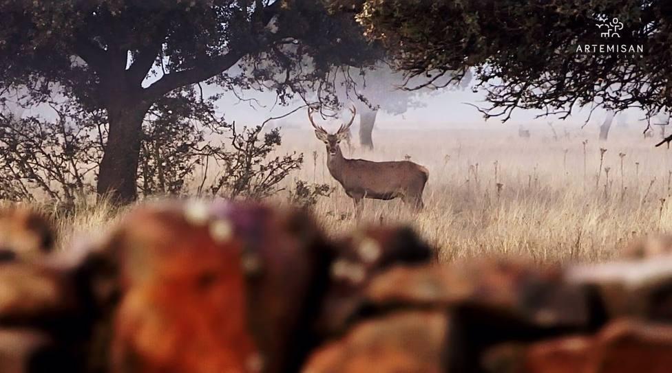 Fundación Artemisan calcula que prohibir la caza en Parques Nacionales puede costar 320 millones en indemnizaciones