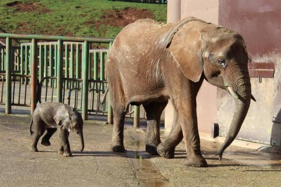 ctv-rxj-elefanta-y-cra