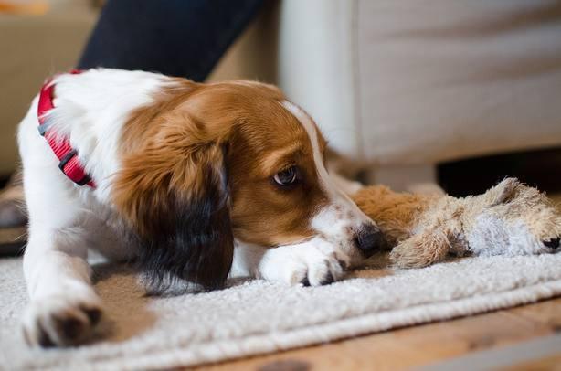 La Rioja obliga a realizar la autopsia a las mascotas cuando mueran