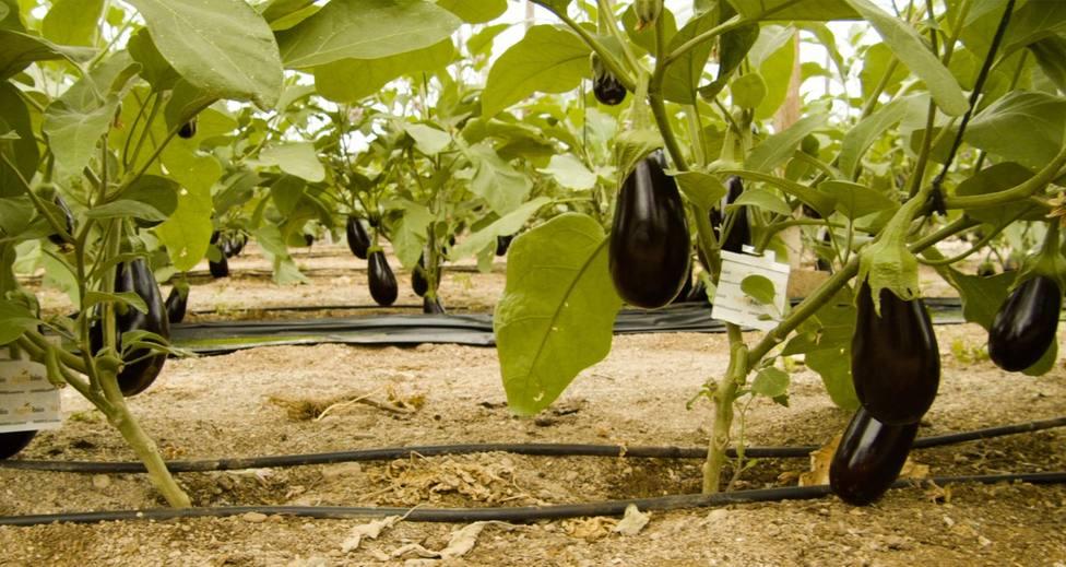 Mitos y verdades sobre la agricultura ecológica