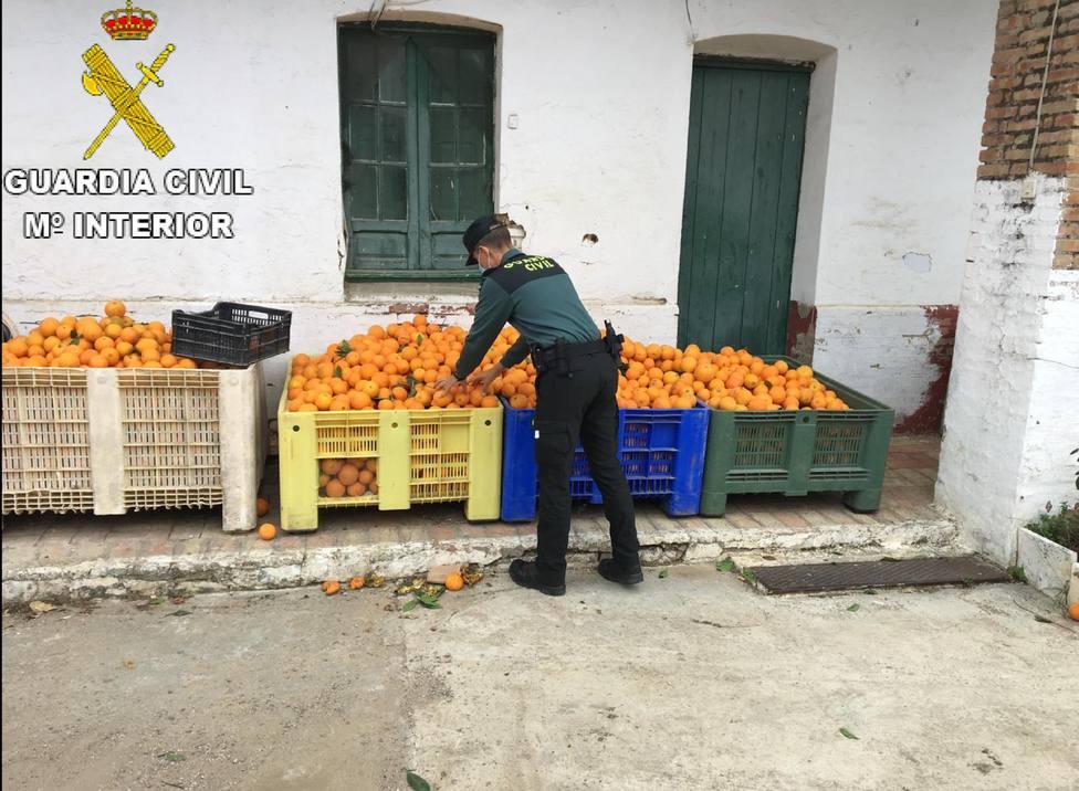 Hurto de naranjas en Gibraleón