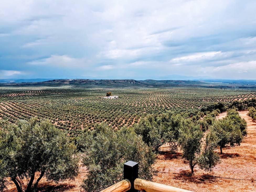 Nos vamos a la Fiesta del Primer Aceite con la Diputación de Jaén