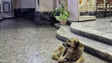 ctv-kf7-perro-iglesia