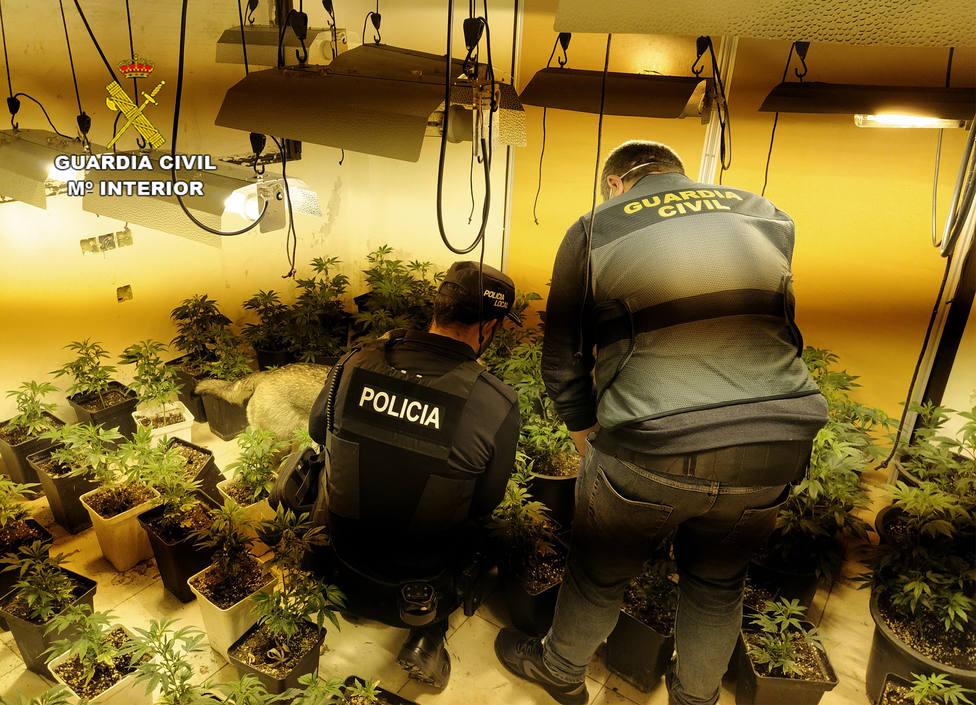 La Guardia Civil desmantela cuatro invernaderos clandestinos de marihuana en viviendas ocupadas ilegalmente