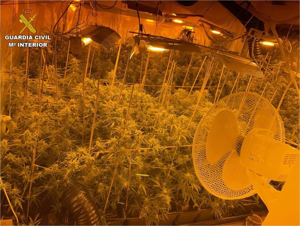 Hallan una plantación de marihuana en los bajos de un hotel de Villajoyosa