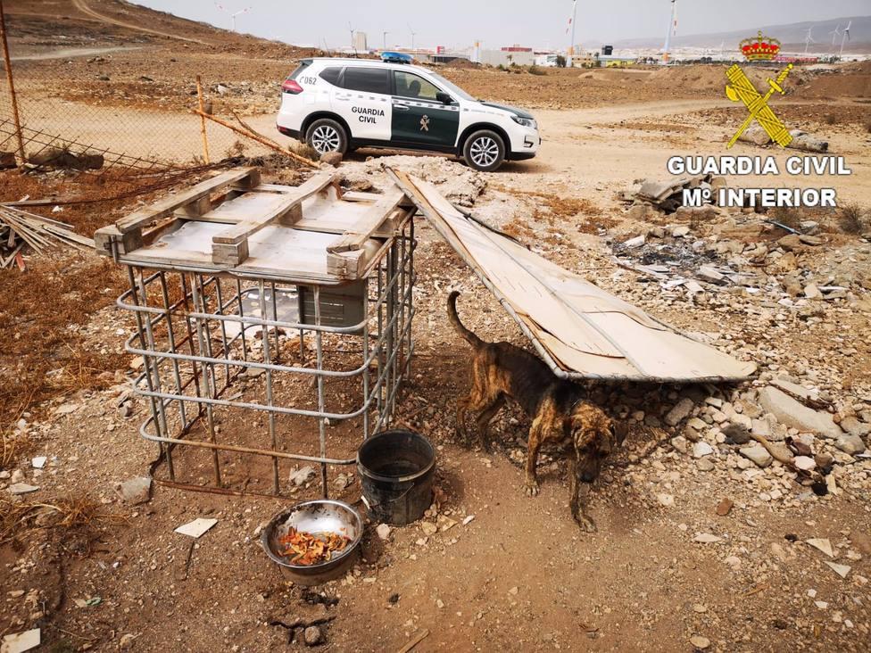 Detenido por alimentar a sus perros con alimentos podridos y suero de vaca cortado