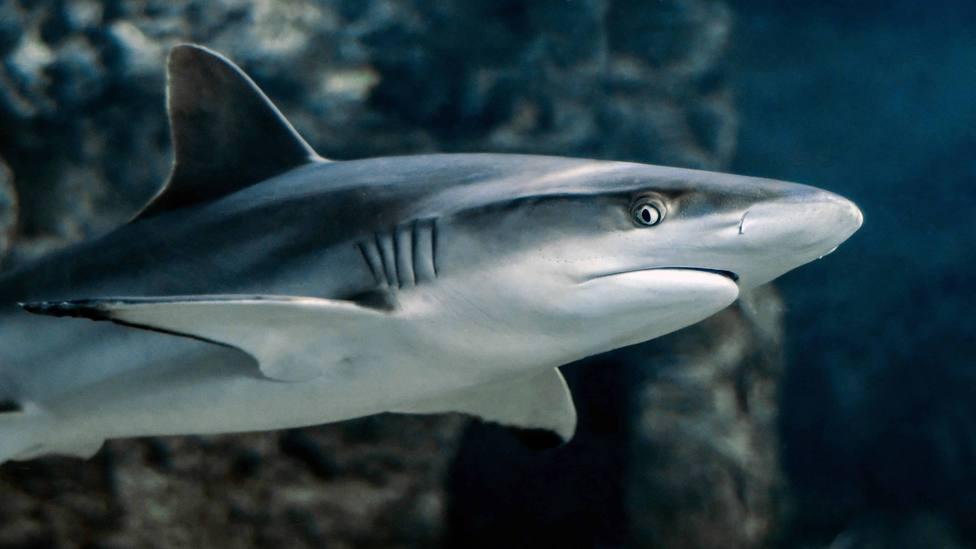 Los protectores del océano: esta es la importante misión de los tiburones