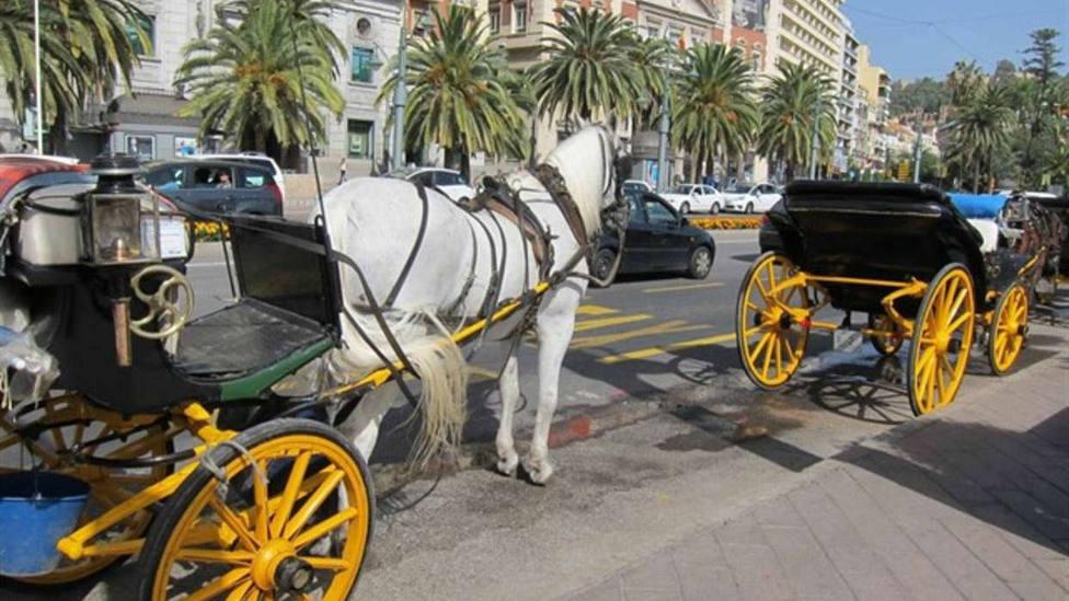 """El """"indignante"""" vídeo de unas animalistas contra un coche de caballos que ha incendiado las redes"""