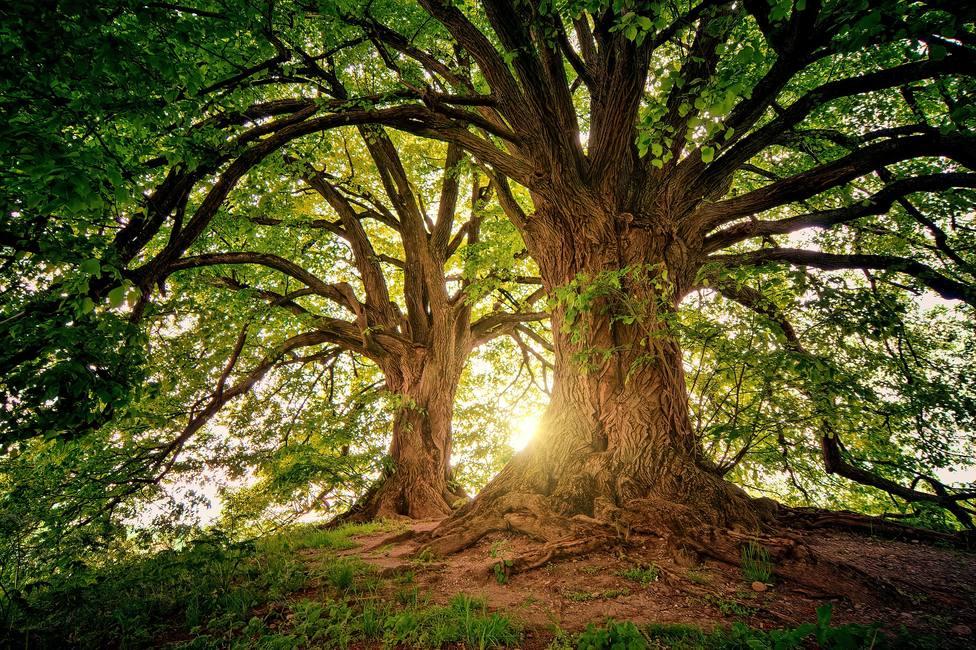 El Vaticano propone reforestar 50 hectáreas en el Amazonas