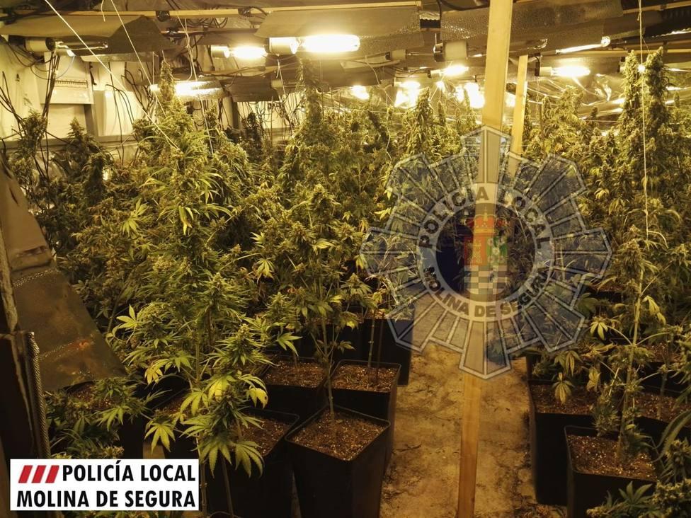 ctv-q9m-polica-local-molina-detenido-por-plantacin-de-marihuana-foto