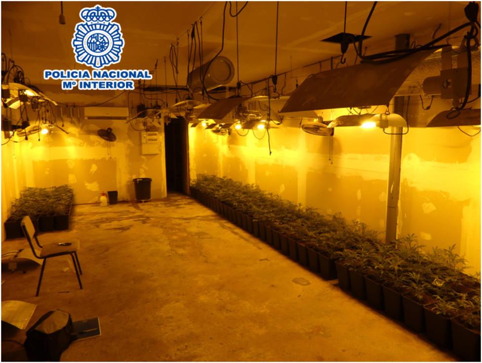 La plantación de marihuana en el garaje de Cornellà de Llobregat, Barcelona - POLICÍA NACIONAL