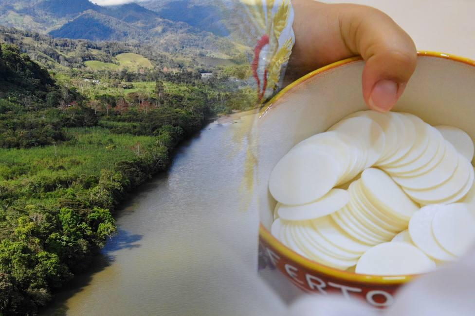 Sínodo para la Amazonía: El peligro de la deforestación y de la falta de Eucaristía