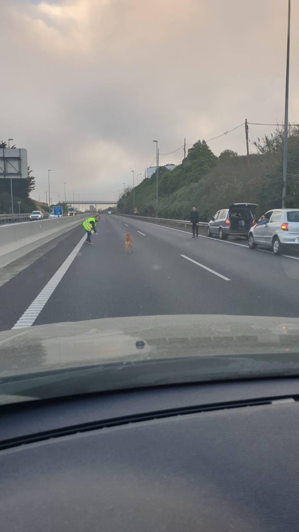 El rescate del can colpasó una hora la autopista