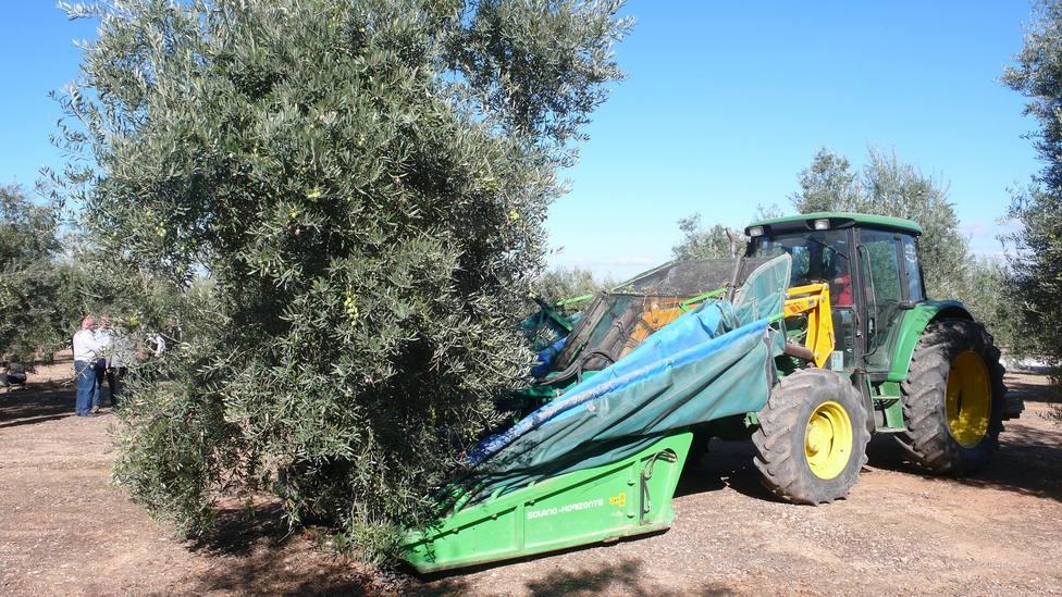 ctv-gxw-olive-332665 1920