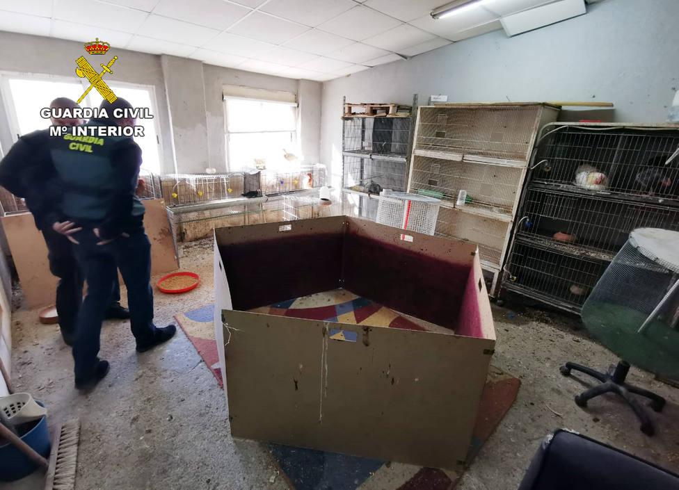 La Guardia Civil desmantela en Cartagena un tentadero ilegal dedicado a peleas de gallos